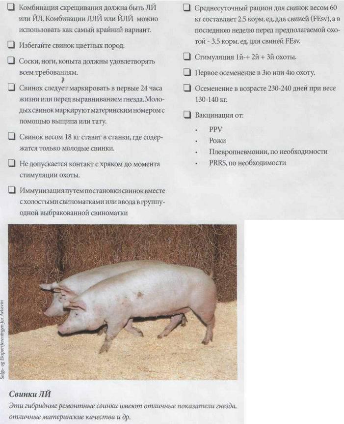 Разведение свиней по линиям: особенности и требования к данному методу   cельхозпортал