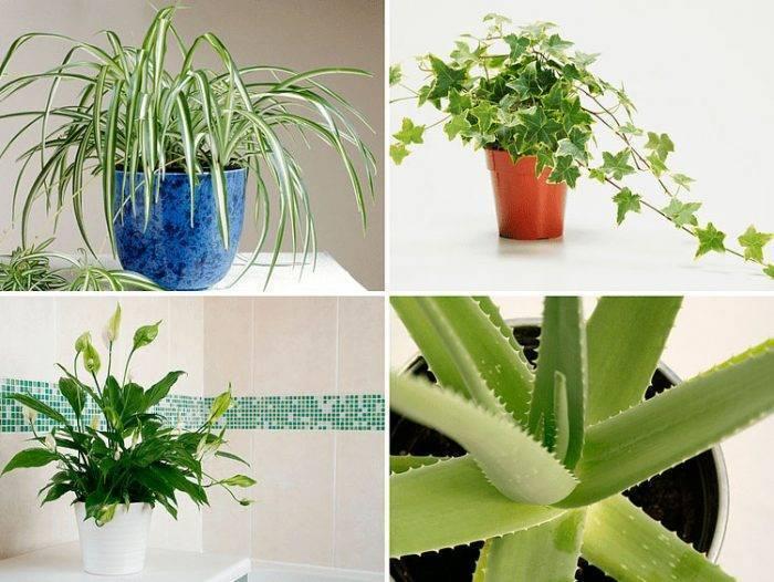 Лучшие комнатные растения для дома и квартиры