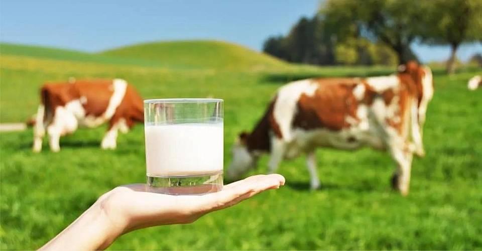 Бруцеллез у коров: признаки, симптомы, лечение и профилактика заболевания