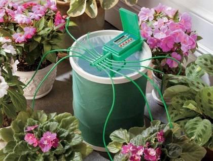 Лучшие системы автополива для комнатных растений
