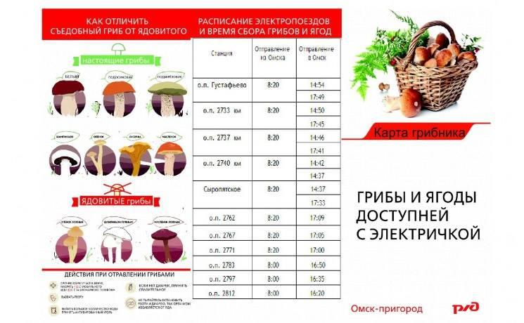 Грибы кировской области 2021: когда и где собирать, сезоны и грибные места