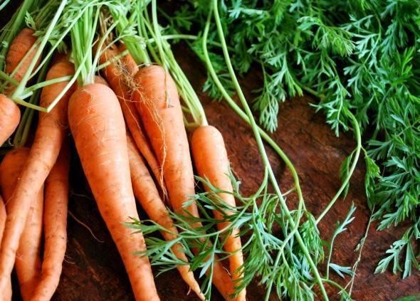Как сажать морковь семенами в открытом грунте: когда садить, как сеять