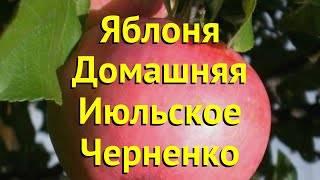 Превосходный вкус и хорошая зимостойкость характеризуют сорт июльский черненко