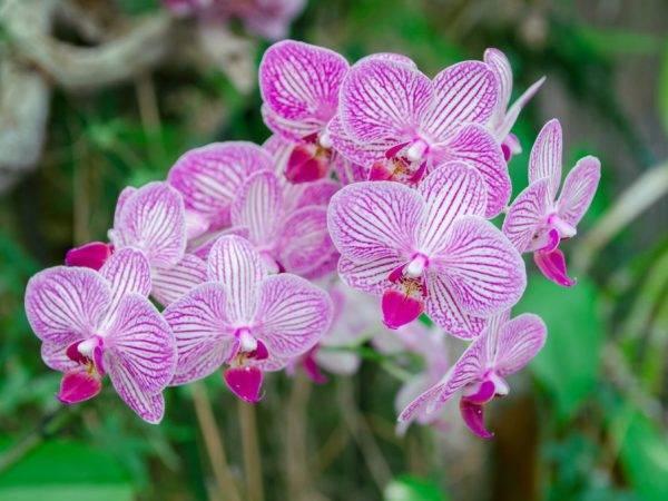 """Горшок """"корона"""" для орхидей с поддоном: чем хорош и плох, отзывы о кашпо"""