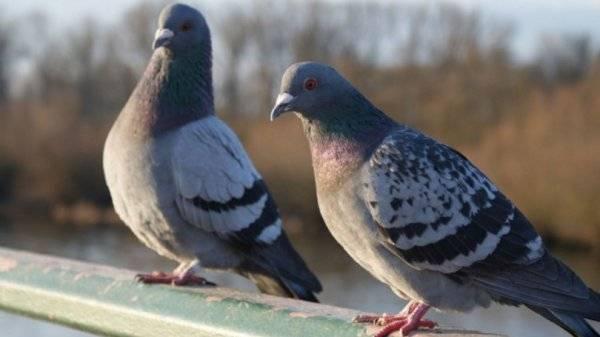 Лозеваль – эффективный и недорогой препарат для лечения кур. должен быть в ветеринарной аптечке каждого птицевода.