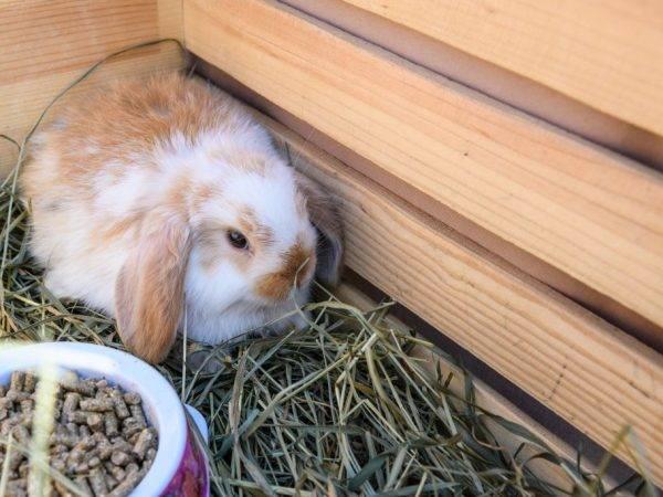Виды мини-ферм для кроликов, чертежи и как изготовить своими руками