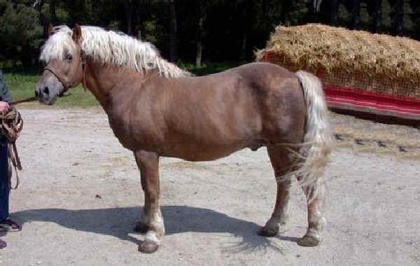Различные породы пони