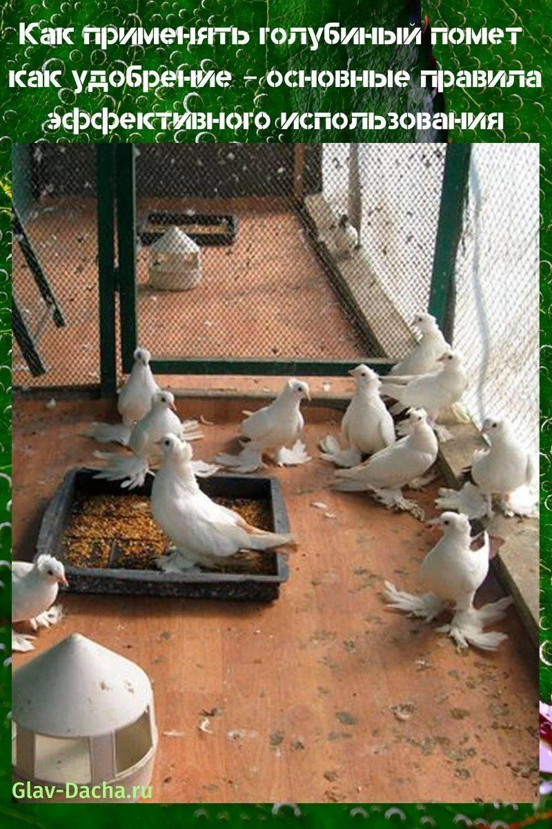 Особенности состава голубиного помёта как удобрения: как его использовать, разводить