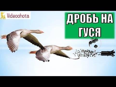 Обзор манков на гусей