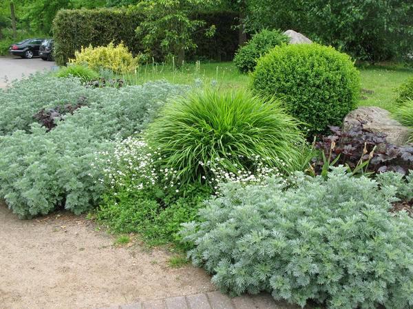 Выращивание декоративной полыни в саду. полынь – сорняк или декоративное растение для сада? условия выращивания полыни