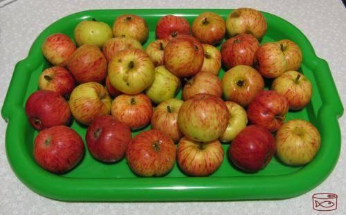 Как заморозить яблоки на зиму в морозилке - способы заготовки пюре, начинки для пирогов и целых долек