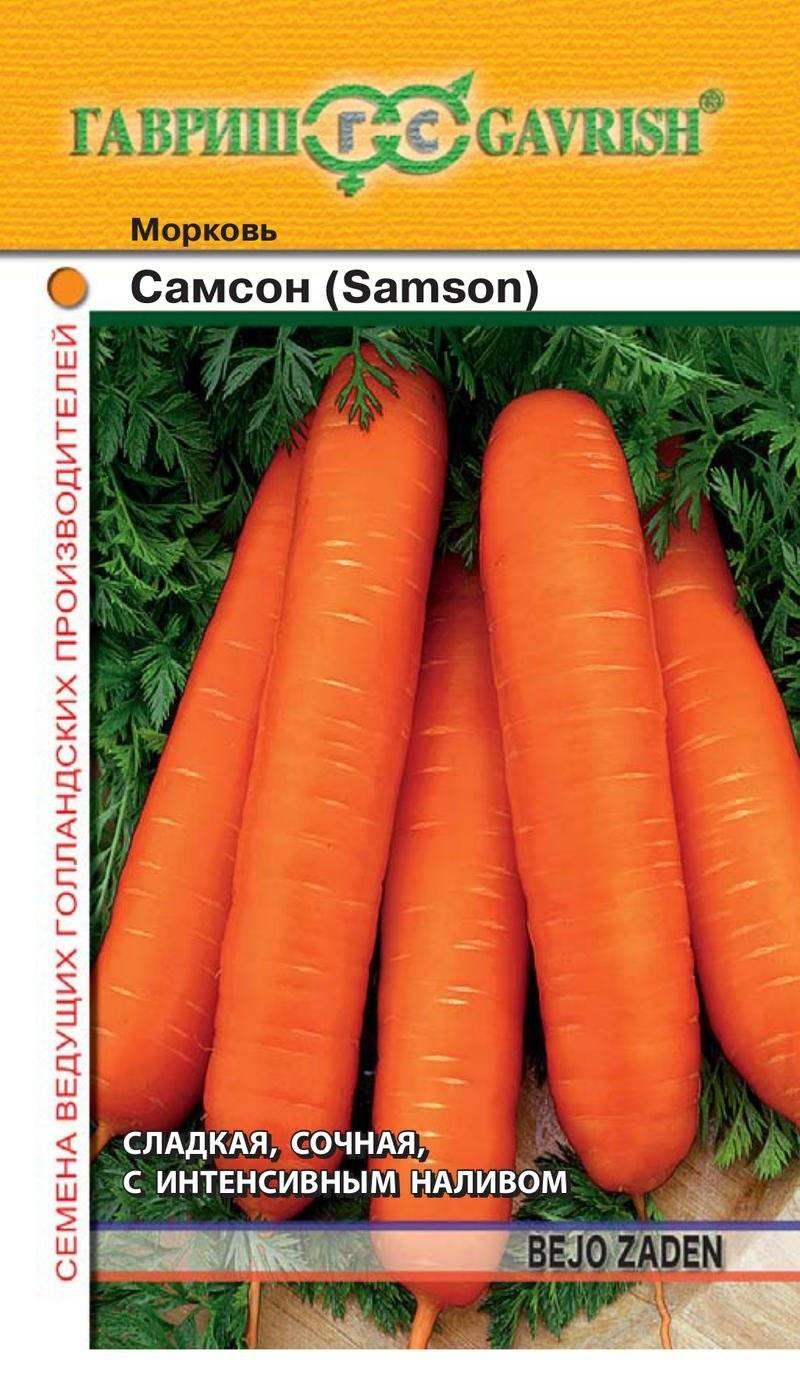 Морковь самсон: описание и характеристики сорта, советы по посадке и уходу