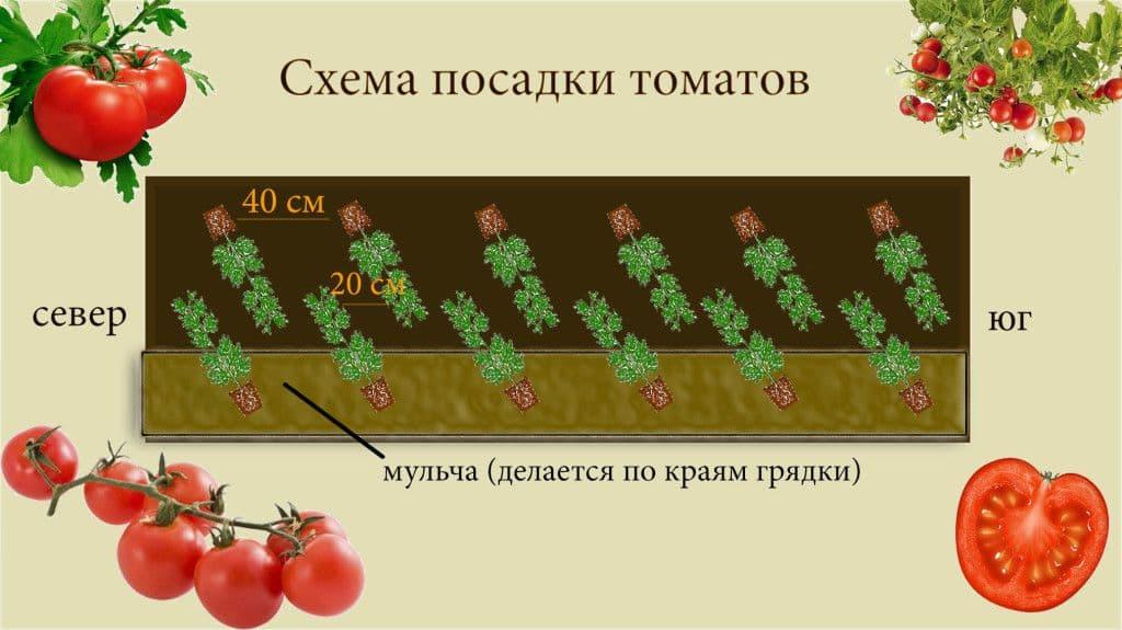 Пасынкование томатов в теплице: схема, формирование куста, время, особенности, фото