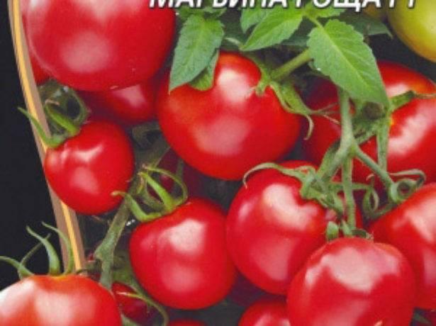 Марьина роща — описание сорта томатов, правила выращивания