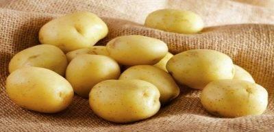 Как и где нужно хранить картошку в квартире: способы и температура хранения