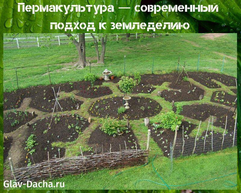 Пермакультура на садовом участке — что это такое, как организовать | сад и огород