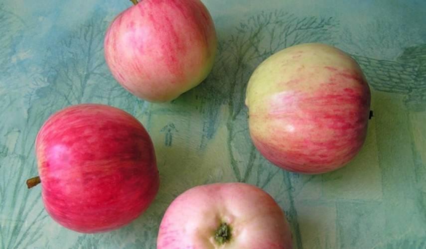 """Секреты успешного выращивания яблони """"башкирская красавица"""""""