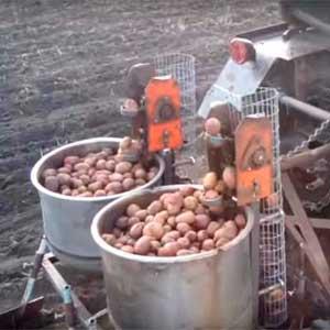 Как сделать самодельную картофеля сажалку размеры. самодельная картофелесажалка для минитрактора. чертежи, размеры, видео.