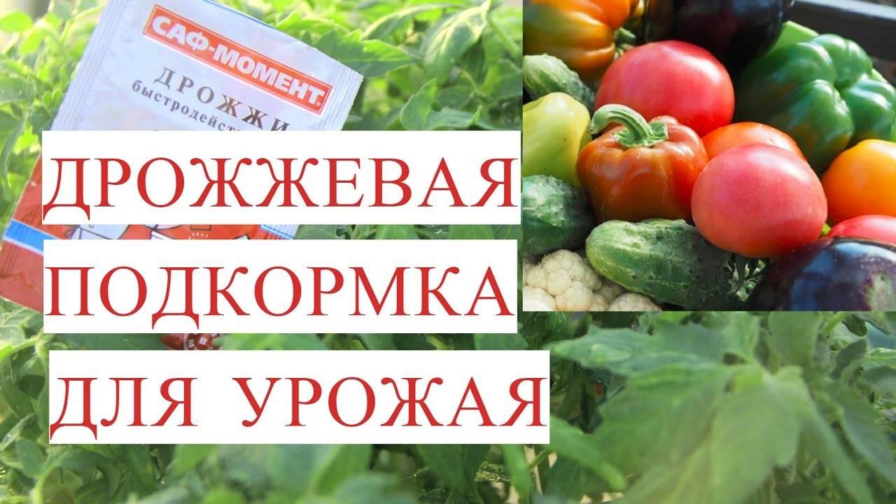 Дрожжевая подкормка для рассады и всего огорода: рецепты приготовления | народные знания от кравченко анатолия