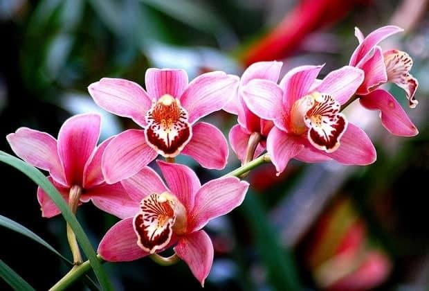 Как и чем подкармливать орхидею в домашних условиях: лучшие удобрения