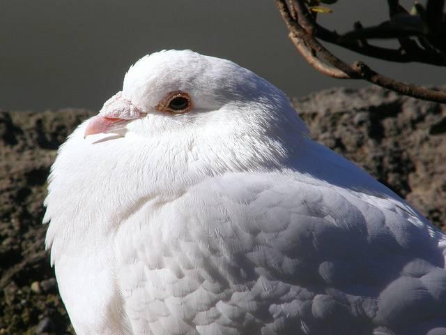 Проведение вакцинации птиц всех видов в беларуси
