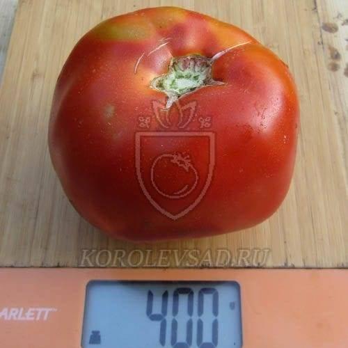 Индетерминантный сорт с превосходной устойчивостью — томат стеша f1: описание помидоров