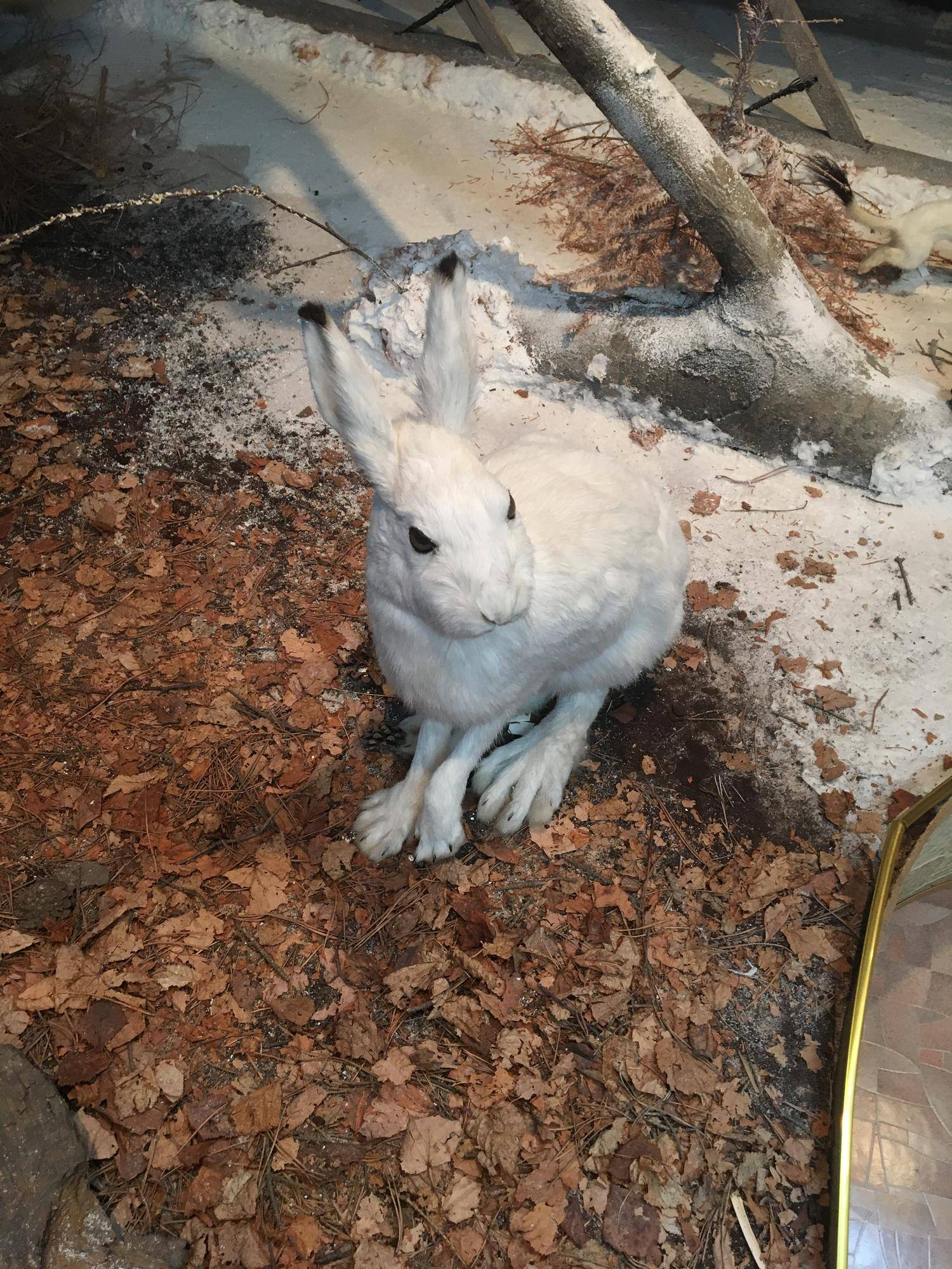 Заяц: характеристики, повадки, особенности жизненного цикла и естественные враги (95 фото)