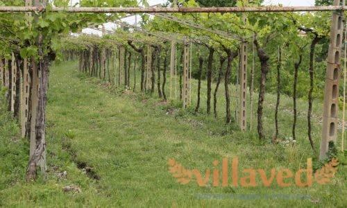 Шпалера для винограда своими руками: схема и чертежи, видео, фото
