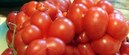 Семена томатов: лучшие сорта помидоров для открытого грунта