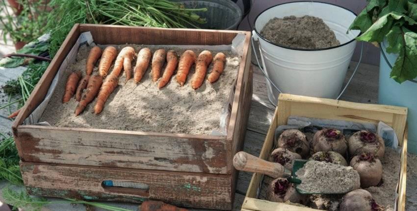 Как сохранить морковь на зиму в домашних условиях, если нет погреба: эффективные способы и правила содержания урожая до весны без подвала selo.guru — интернет портал о сельском хозяйстве