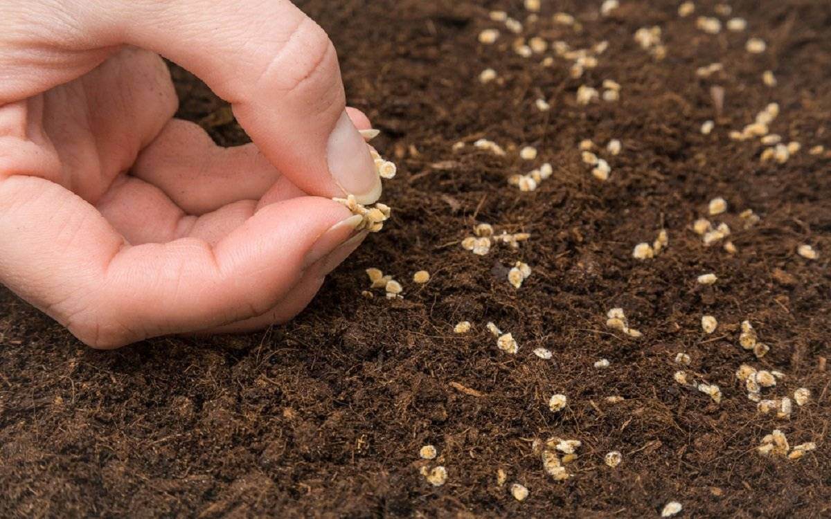 Для новичков: первая рассада. подготовка, сорта семян, сроки посева, свет и полив рассады, пикировка - огород