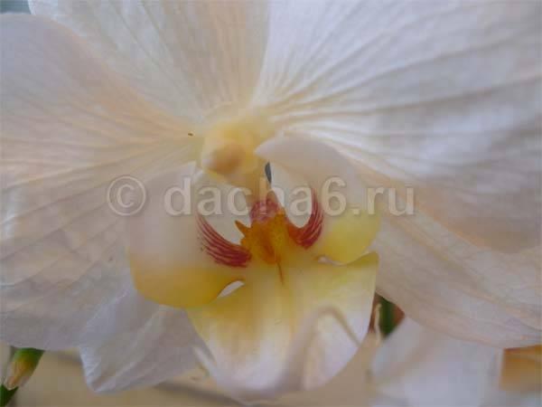 Способы полива орхидей: методом погружения, в закрытой системе и в коре, а также пошаговая инструкция по увлажнению selo.guru — интернет портал о сельском хозяйстве