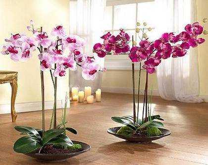 Орхидея (52 фото): особенности ухода в домашних условиях. как правильно ухаживать за цветком в горшке после покупки? описание красивых сортов