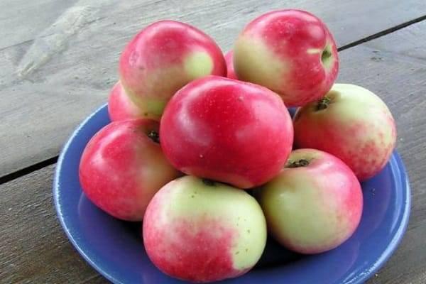 Летний сорт яблонь «солнцедар»: характеристика, плюсы и минусы