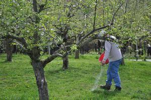 Чем подкормить яблоню для отличного урожая? правила проведения подкормок