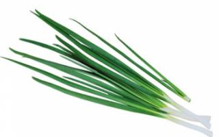 Лук слизун: основы выращивания и ухода за ним