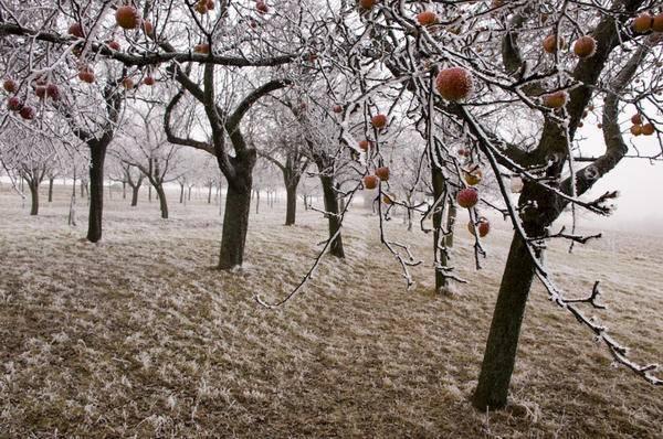Как подготовить яблоню осенью к зиме на урале: советы по укрытию и подготовке