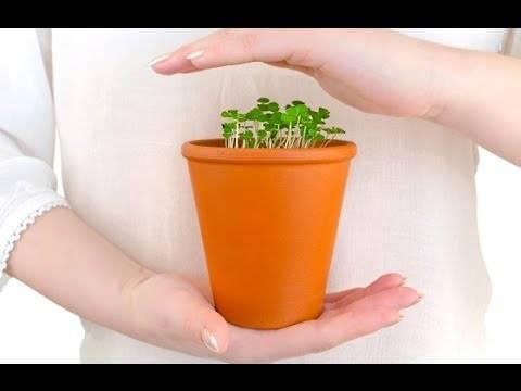 5 советов по уходу за комнатными растениями