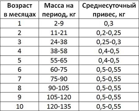 Как определить, сколько весит свинья: таблицы веса и правила обмеров