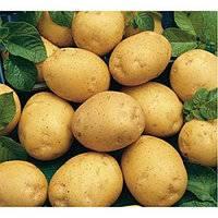 Какова урожайность картофеля с 1 га земли