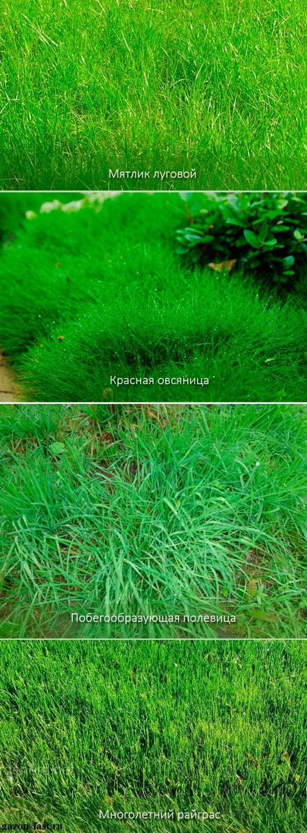 Виды газонной травы с фото, названиями и описанием. газонные травы сорта