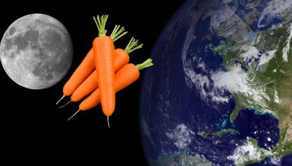 Когда убирать морковь с грядки на хранение в 2021 году