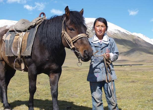 Монгольская лошадь: фото и описание породы