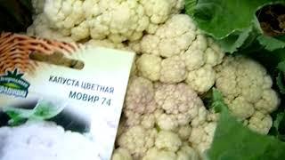 Высокоурожайные сорта цветной капусты | садоводство и огородничество