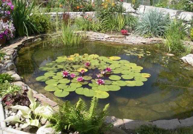 Растения для пруда водные - какие купить на дачу: названия растений