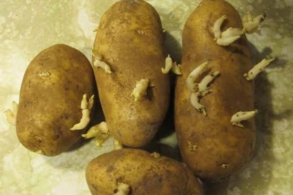 Картофель «аврора»: описание сорта, достоинства и недостатки. как получить высокий урожай картофеля «аврора» - автор екатерина данилова - журнал женское мнение