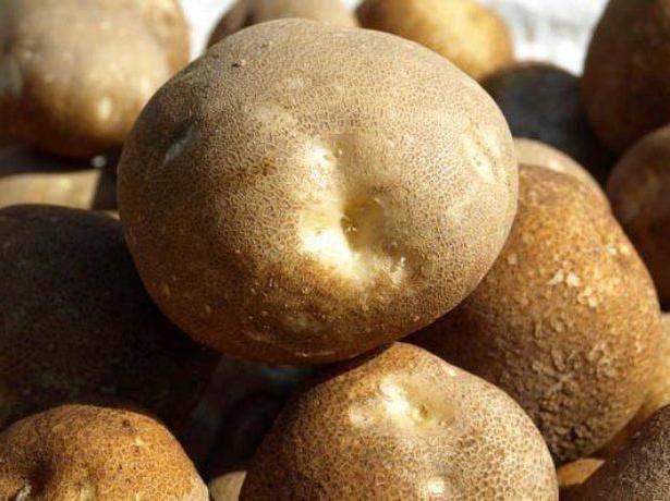 Картофель сорта киви - описание внешнего вида и вкусовые качества