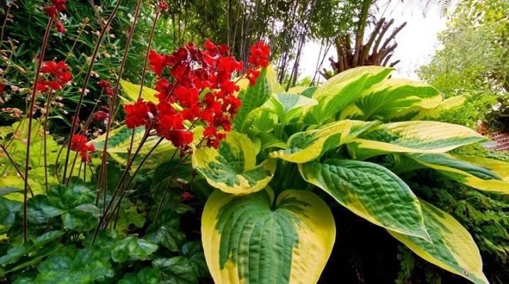 Однолетние тенелюбивые растения и цветы для сада: фото и названия