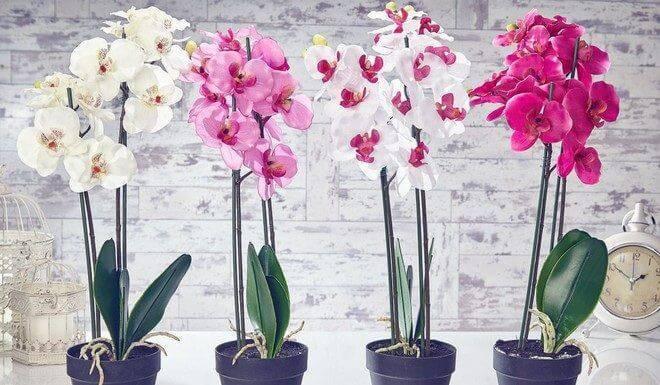 Подкормка орхидей в домашних условиях: как удобрять при цветении