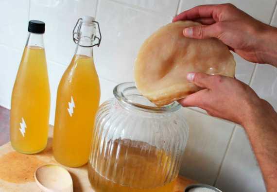 Чайный гриб: как вырастить с нуля